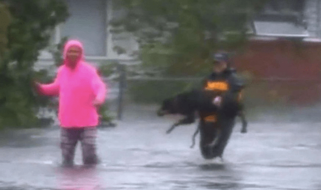 Reporter Interrupts Facebook Live Report To Save Therapy Dog From Hurricane Florence Flooding