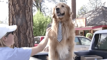 Dog mayor Mayor Max is elected to head the town of Idyllwild, California.