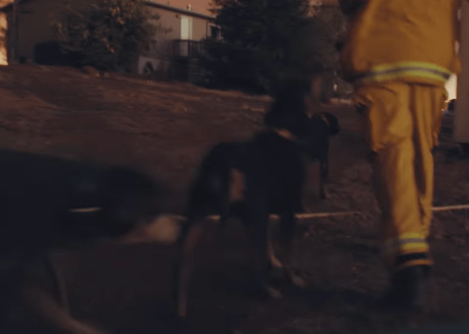 Sacramento TV Crew Rescues  Stranded Dogs During Wildfire Coverage