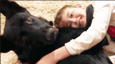 Stranger drives dog 2,300 miles for reunion with boy recovering from surgery.