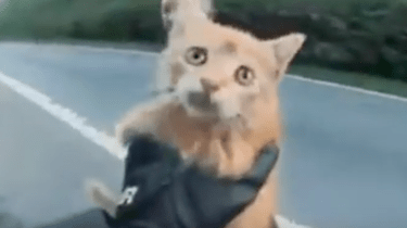 French biker saves tiny kitten in middle of busy road.