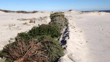 New Jersey says you can recycle old Christmas trees to help stop erosion at the Island Beach.