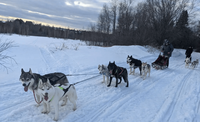 The sled dogs and their humans are covering about 50-75 miles a day delivering groceries in rural Maine.