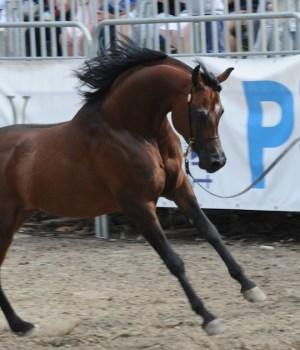 L'Arte del Cavallo alla Versiliana