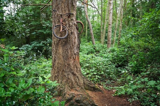 tree eats bicycle