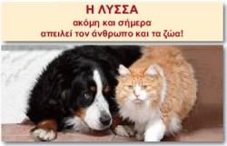 lyssa2
