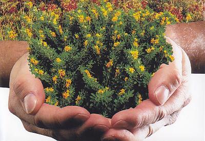 Φωτ.: Μια χούφτα ζωής: Η βλάστηση του Αιγαίου (λεπτομέρεια από εμπνευσμένη αφίσα της Περιφέρειας Νοτίου Αιγαίου, έτος 2006)
