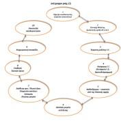 Διάγραμμα ροής 2