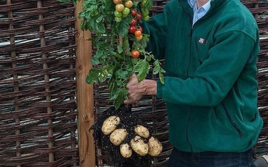 tomtata-ubridiko-futo-paragei-tomates-patates