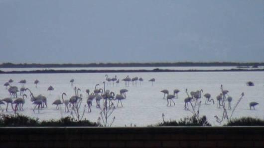 flamingko, ygrotopos, limnothalassa