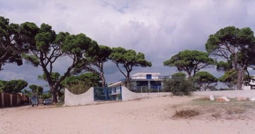 Το σπάνιο οικοσύστημα του δάσους κουκουναριάς του Σχινιά στο Μαραθώνα, αποκλεισμένο από τις οικείες! (από το αρχείο του συγγραφέα)