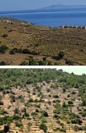 (Πάνω) Παραδοσιακοί αγροί γίνονται περιζήτητα οικόπεδα για οικοδόμηση!.. (Κάτω) Ο ερχομός της φύσης στις αυλακιές/στους τοίχους τ' ανθρώπου: η συνέχεια του φυσικού δημιουργήματος...