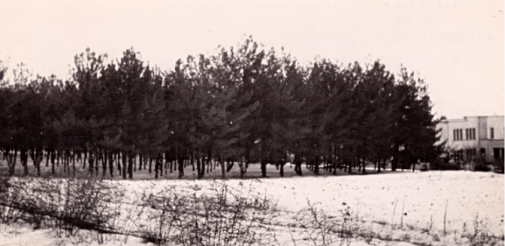 Άλσος δημοτικού σχολείου Δράμας, που δημιουργήθηκε από τους μαθητές και τη δασική υπηρεσία κατά τη δεκαετία του 1920.
