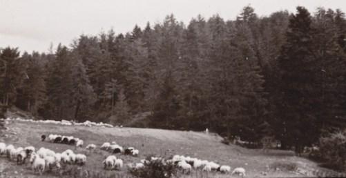 Δάση εποικιστικά διαχειρίζονταν από τις αγροτικές υπηρεσίες! (από το αρχείο του συγγραφέα)