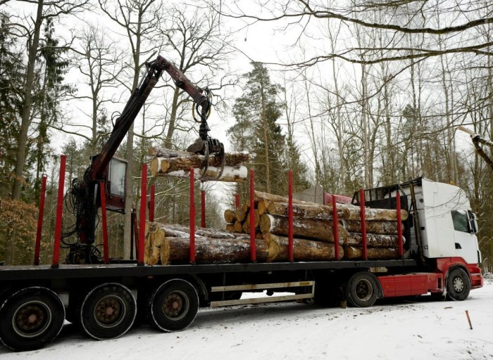 A truck is loaded with logged trees at one of the last primeval forests in Europe, Bialowieza forest, near Bialowieza village