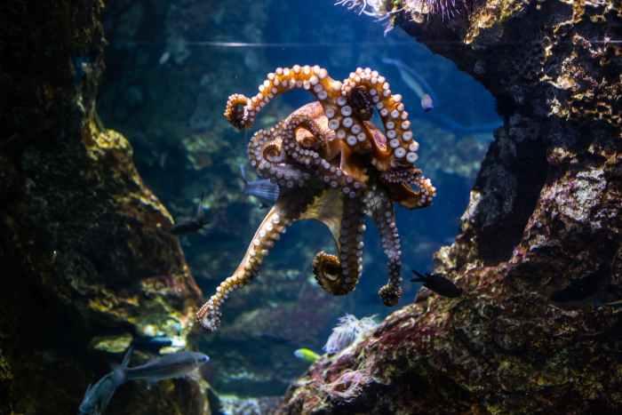 sea water ocean animal