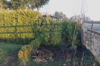 Die Lücke zum rechten Nachbarn wurde mit den Bäumchen der Hecke geschlossen.