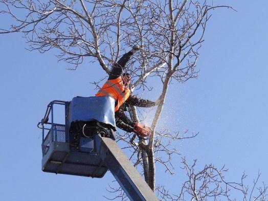"""Résultat de recherche d'images pour """"Reasons for Hiring Professional Tree Removal Services"""""""