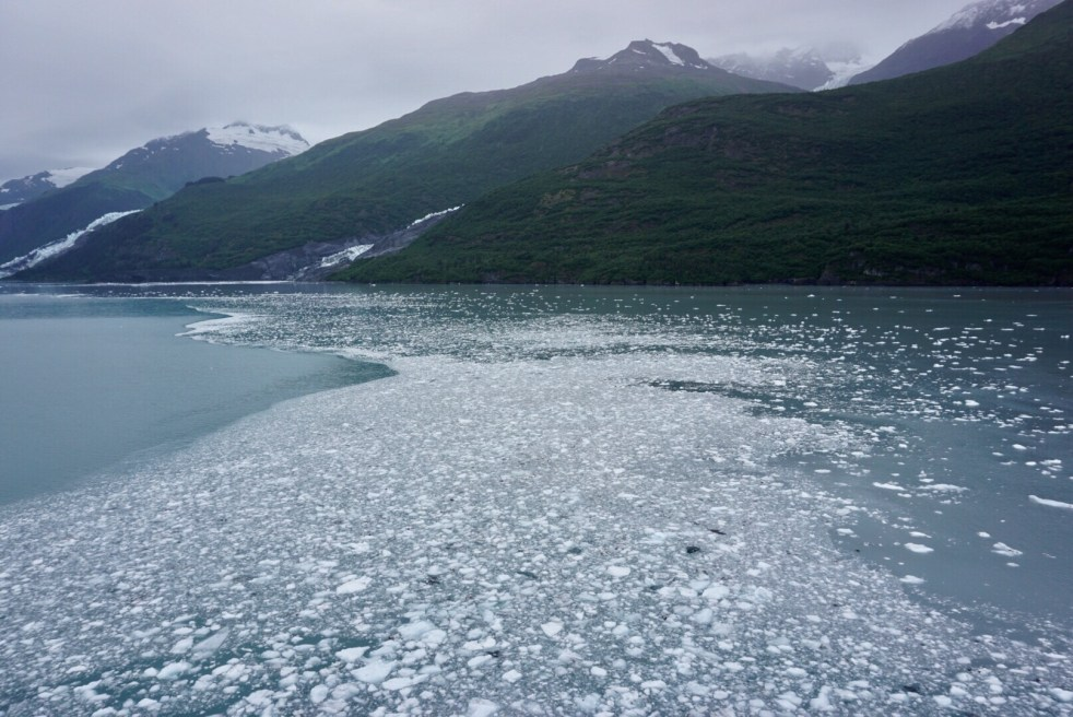 Floating ice in College Fjord