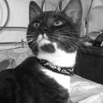 International Worldwide Pet Blogging