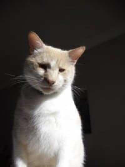 Dash Kitten Solo Image