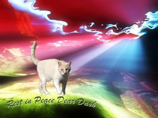 Dash Kitten Memorial Image 2