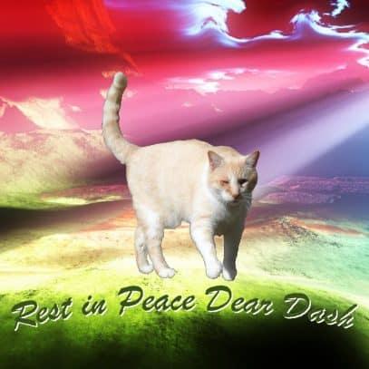 Dash Kitten Memorial Image RB