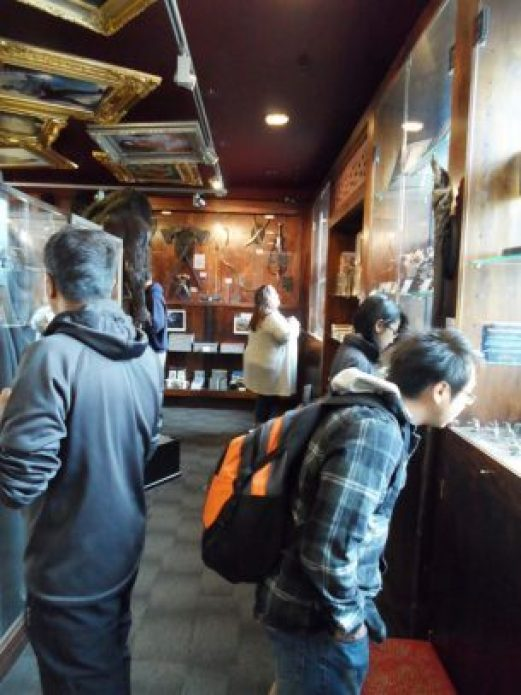 Weta Cave shop interior