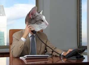 Dash Kitten Silver Kitten the Business Cat