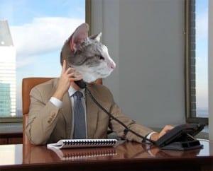 Dash Kitten Silver Kitten the Business Cat