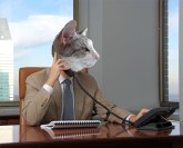 Silver Kitten the Business Cat