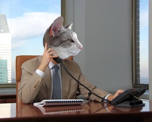 Silver Kitten the Business Cat