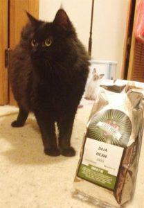 Diva Bean Phoebe Kitten
