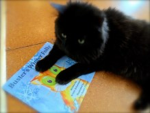 Dash Kitten Buster's Winter Folly