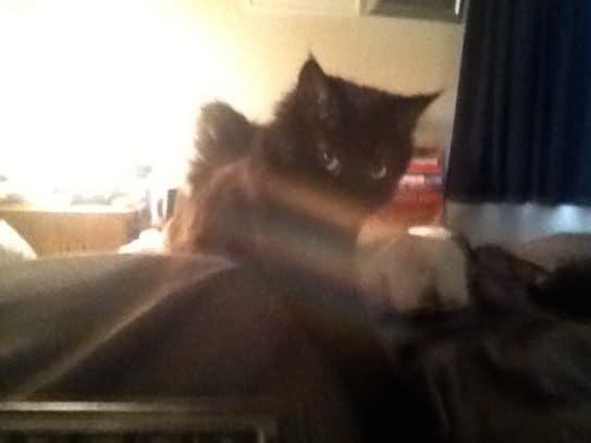 Kitten Selfie