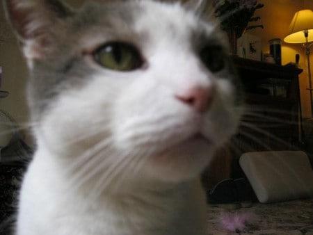 Cat close up image