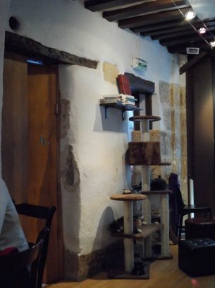Paris Cat Cafe Upstairs