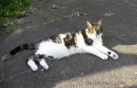 Peanut the Cat at Dash Kitten
