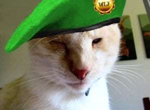 Dash Kitten in Beret #wlf