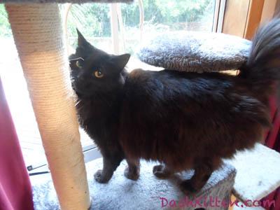 Phoebe at Dash Kitten