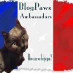 Dash Kitten Dusty Ambassador