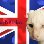 Dash Kitten and Harvey Union Jack