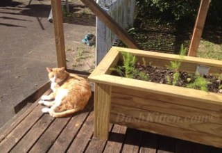 Sunny Sunday Selfie Jack at Dash Kitten