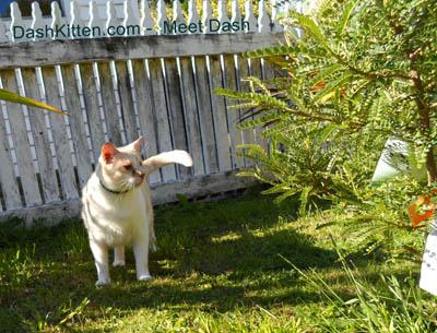 Dash Kitten Portrait