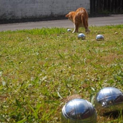 Cat plays Petanque at Dash Kitten