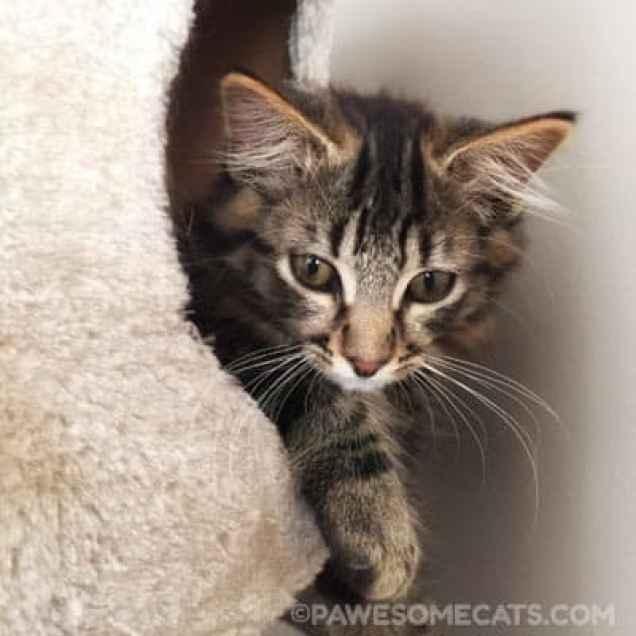 Meet Pawsome Cats