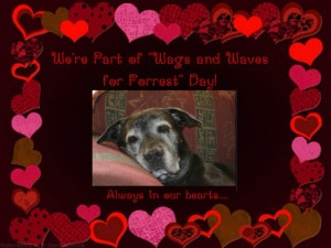 Waves and Wags for Forrest