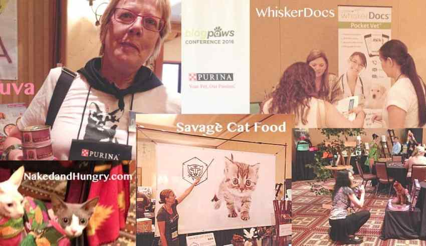 BlogPaws Report from Dash Kitten