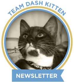Dash Kitten Newsletter Logo