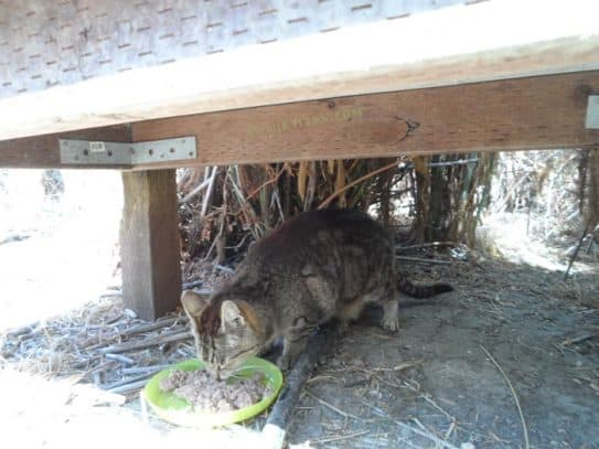 A hungry Project Bay Cat